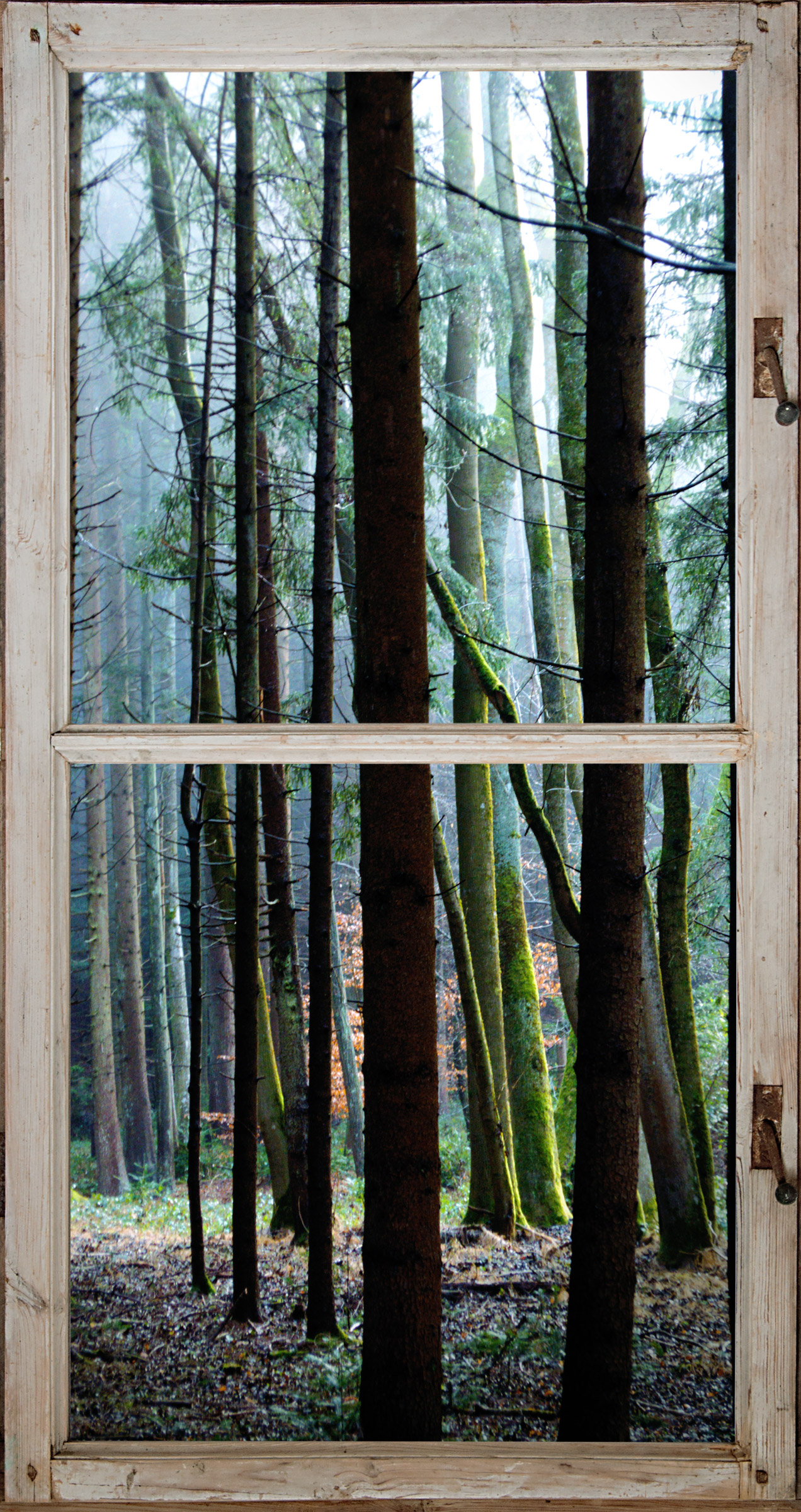 ausblickwaldmitfenster